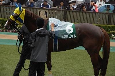 富士Sはエアスピネルが不良馬場をものともせず完勝で重賞3勝目を飾る_b0015386_22282517.jpg