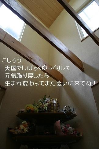 温かいお気持ちをありがとうございました_f0242002_13391304.jpg