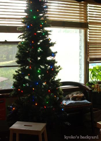早くもクリスマス支度_b0253205_05565047.jpg