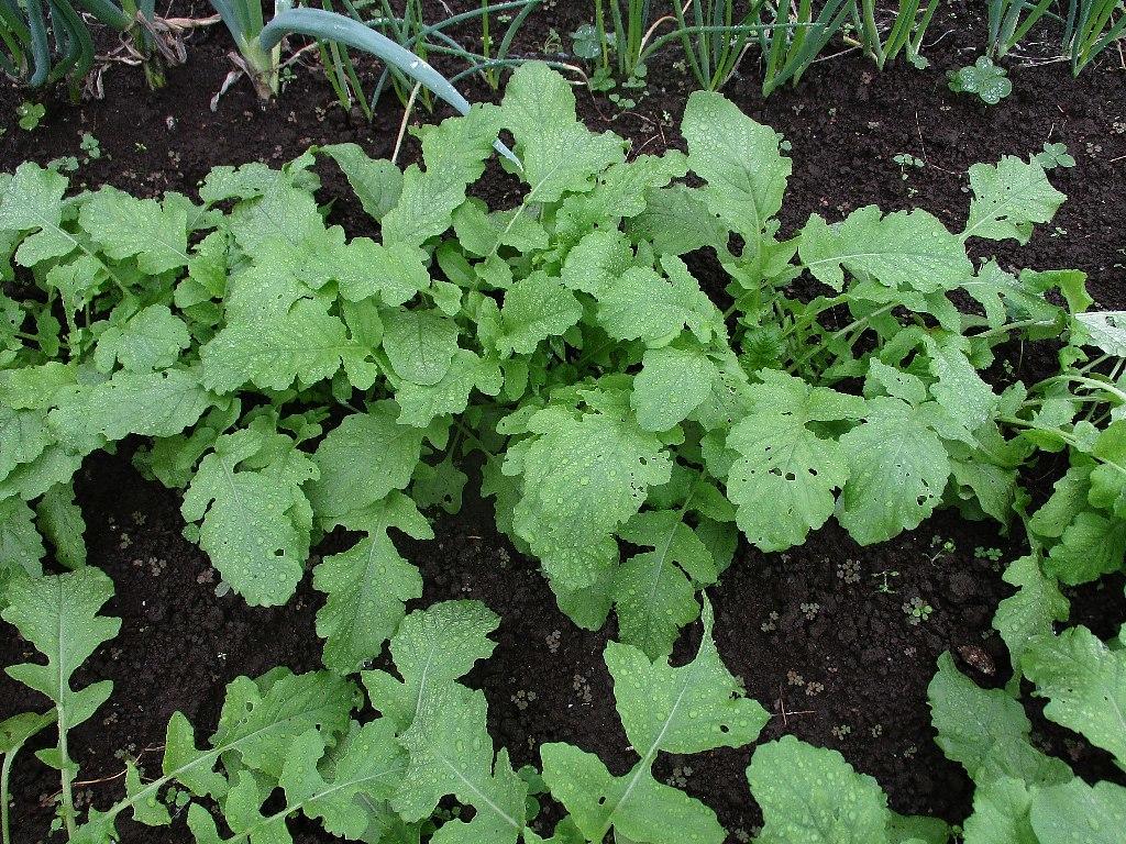 家庭菜園_a0138609_10541124.jpg