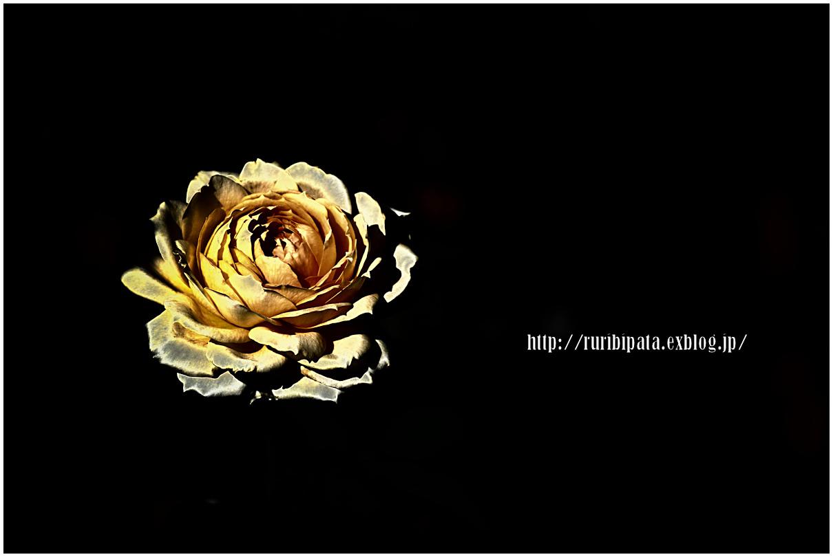 f0302613_18245840.jpg