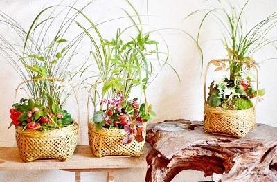 10/22(日)盆栽ワークショップお申し込みの方へ_d0263815_20273067.jpg