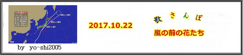 e0033229_2020405.jpg