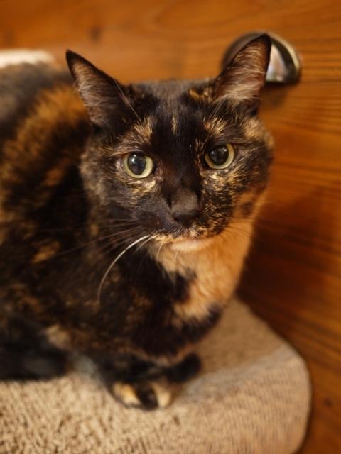 猫のお留守番 ワサビちゃん天ちゃん麦くん茶くん編。_a0143140_21075716.jpg