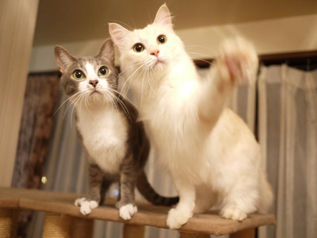 猫のお留守番 ワサビちゃん天ちゃん麦くん茶くん編。_a0143140_21090533.jpg