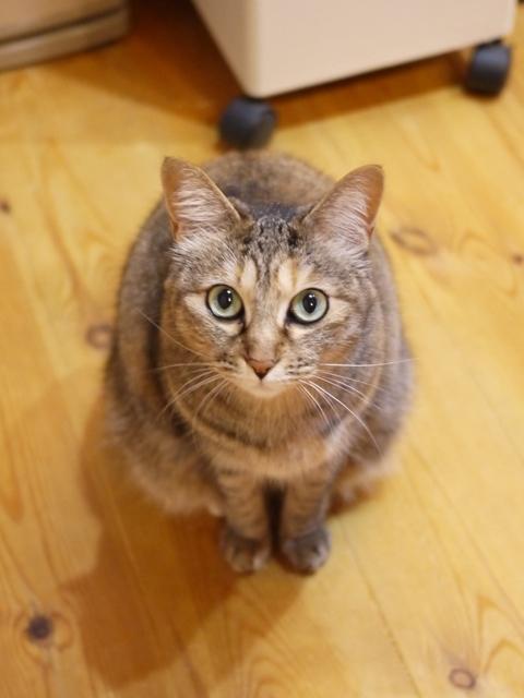 猫のお留守番 うたちゃん編。_a0143140_21122913.jpg