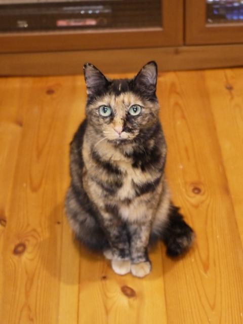 猫のお留守番 マチルダちゃん編。_a0143140_21173813.jpg