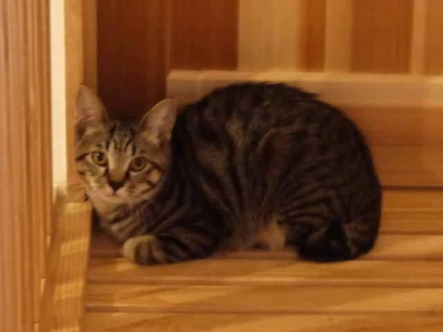 猫のお留守番 星尾くん編。_a0143140_21202429.jpg