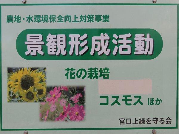 2017年10月29日 秋の贈り物 コスモス畑 ①_b0341140_5273783.jpg