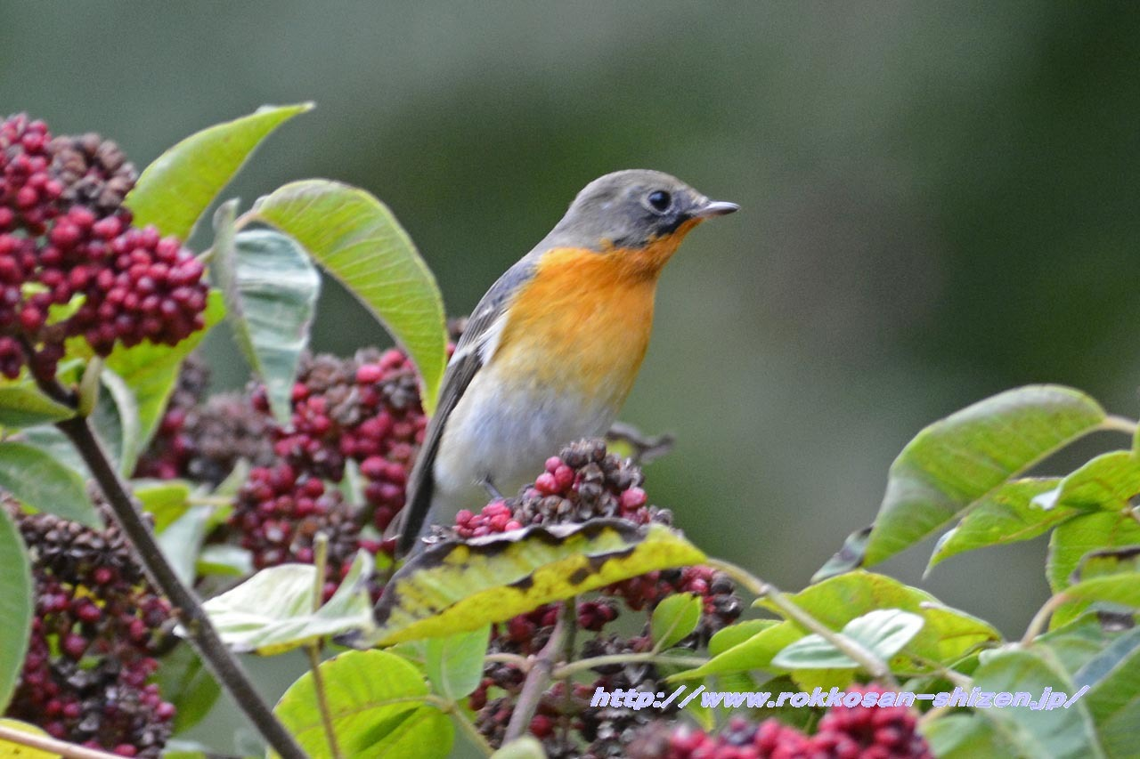 今年度初の鳥撮影_c0129047_07174671.jpg