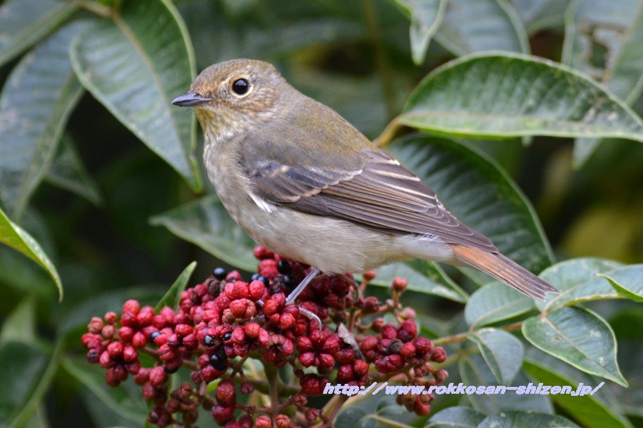 今年度初の鳥撮影_c0129047_07175865.jpg