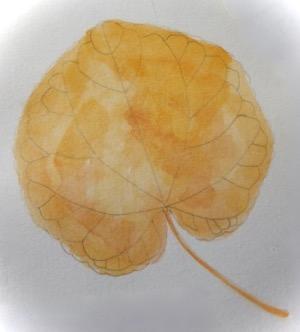 カツラ (植物)の画像 p1_36