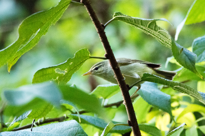 山の恵みを受ける鳥たち_b0148762_15090547.jpg