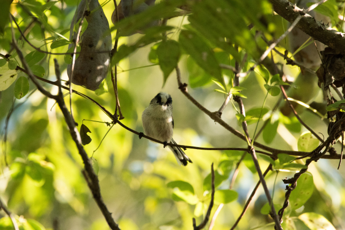 山の恵みを受ける鳥たち_b0148762_15091749.jpg