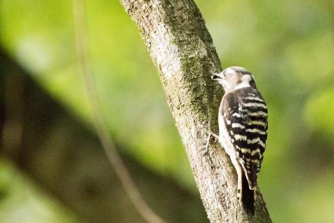 山の恵みを受ける鳥たち_b0148762_15094170.jpg