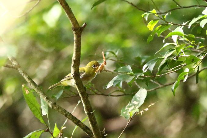 山の恵みを受ける鳥たち_b0148762_15095939.jpg