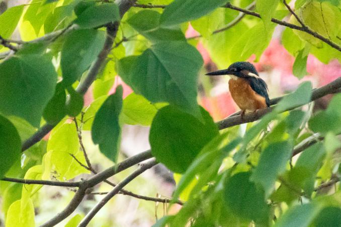 山の恵みを受ける鳥たち_b0148762_15100905.jpg