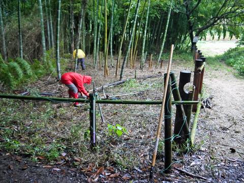 柵補強とアズマネザサ根っ子処理10・21県所有竹林整備③_c0014967_14582896.jpg