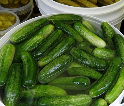 異文化たっぷりNYの「ピクルス・デー」Pickle Day 2017_b0007805_9175158.jpg