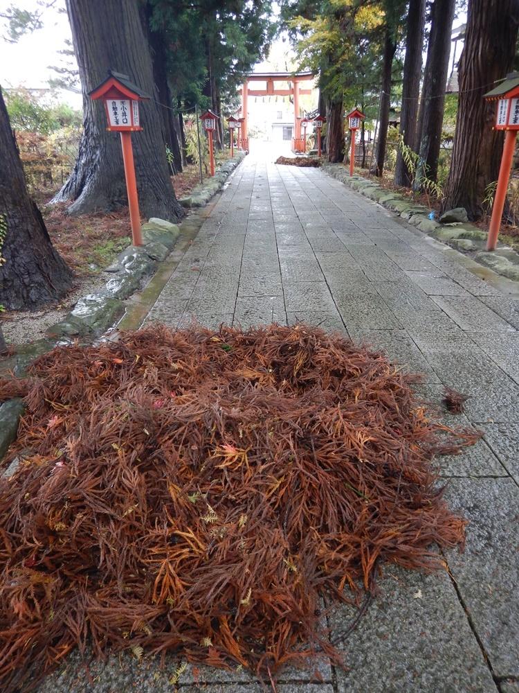 台風の置き土産_c0111229_20345118.jpg