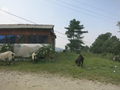 インド(デリー)とネパールの旅\'17_e0097130_17073530.jpg