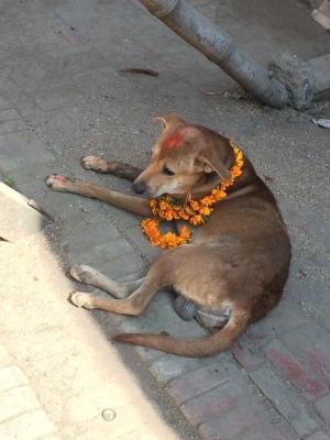 インド(デリー)とネパールの旅\'17_e0097130_17573373.jpg