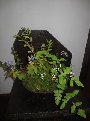 山野草が観られる「芭蕉の館」④_f0289632_10581486.jpg