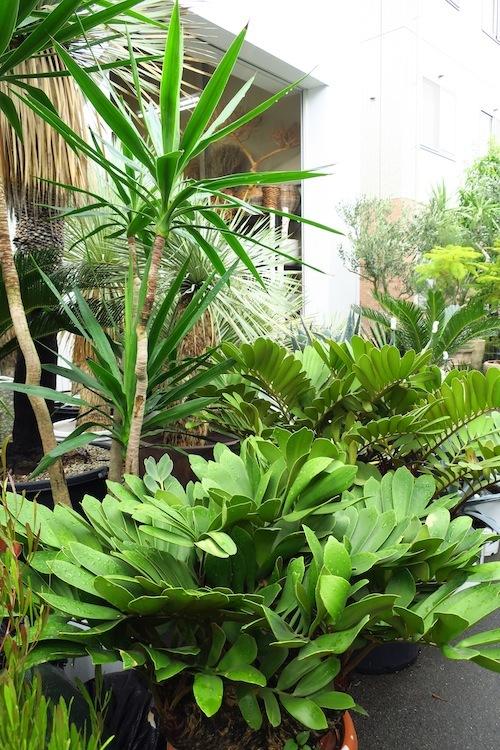 FiELD植物愛好会_f0324766_13554523.jpg