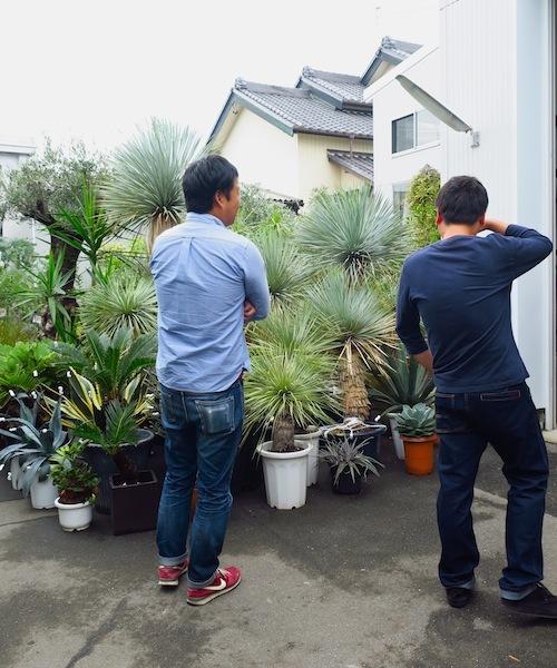 FiELD植物愛好会_f0324766_13554585.jpg