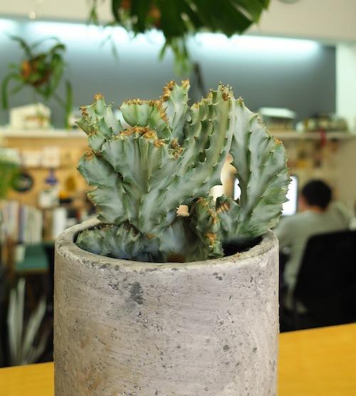 FiELD植物愛好会_f0324766_17081859.jpg
