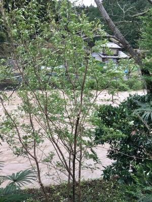 台風の影響により休業します。_f0296675_07085400.jpeg