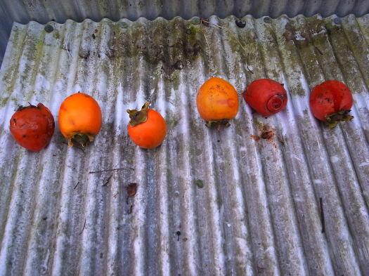 秋の長雨解消、日差しが眩しい!_c0061686_09152792.jpg