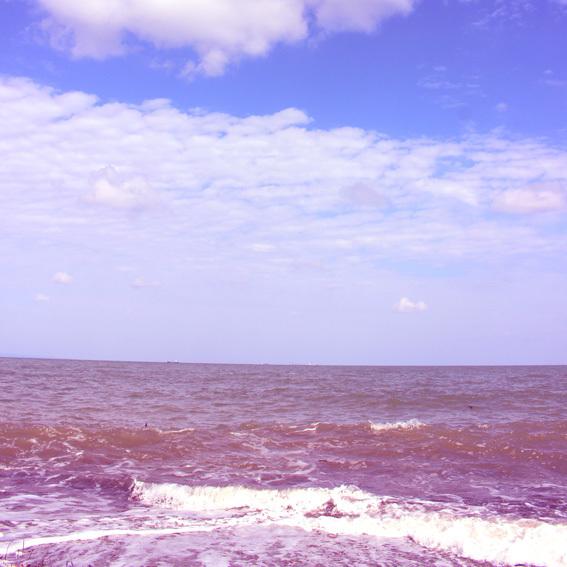 やっぱり晴れた☆海辺で野生のハーブ摘み_a0329820_16374724.jpg