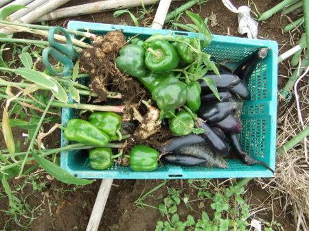 夏野菜は終了_b0137932_18511666.jpg