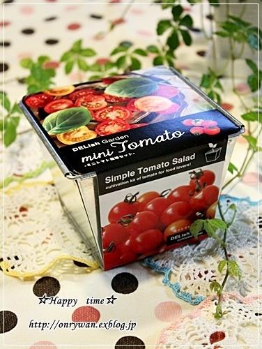 バゲットサンド弁当とうちの子トマト☆やっと収穫♪_f0348032_18273910.jpg