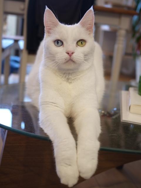 猫のお留守番 リュウちゃん編。_a0143140_23510118.jpg