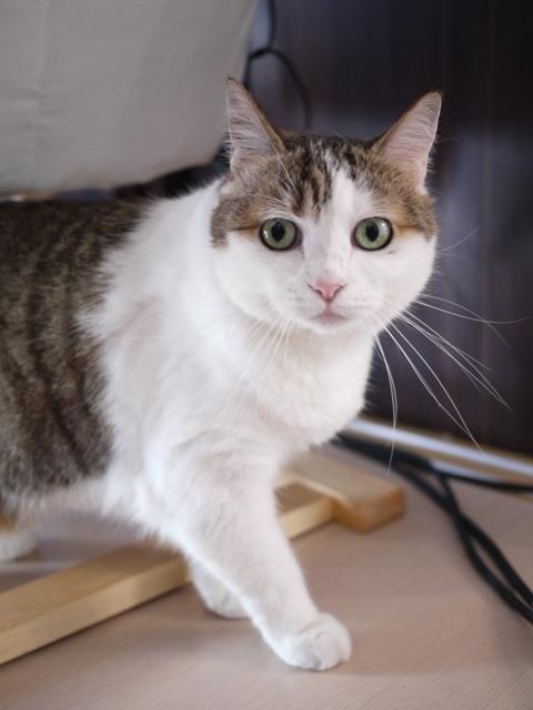 猫のお留守番 さくらちゃん編。_a0143140_23561406.jpg