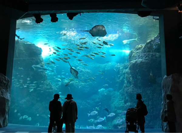 水族館に行ってきました_d0322040_22381414.jpg