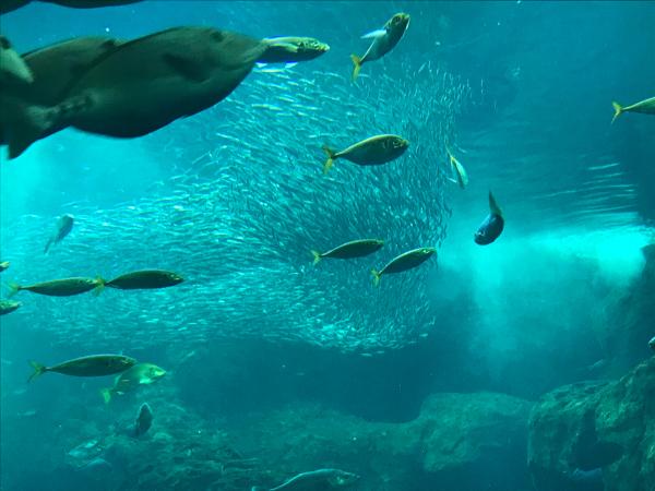水族館に行ってきました_d0322040_22390350.jpg