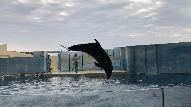 水族館に行ってきました_d0322040_22410608.jpg