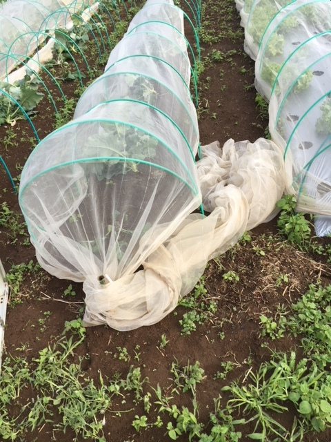 台風21号の爪痕です 予想通り茄子は全滅 背の低い野菜達はダメージは大きかったですが助かりました_c0222448_12023728.jpg