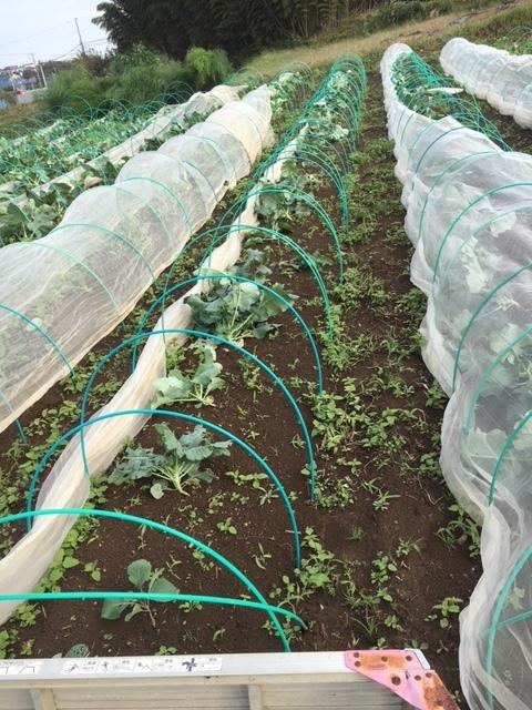 台風21号の爪痕です 予想通り茄子は全滅 背の低い野菜達はダメージは大きかったですが助かりました_c0222448_12025250.jpg
