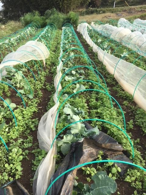 台風21号の爪痕です 予想通り茄子は全滅 背の低い野菜達はダメージは大きかったですが助かりました_c0222448_12032882.jpg
