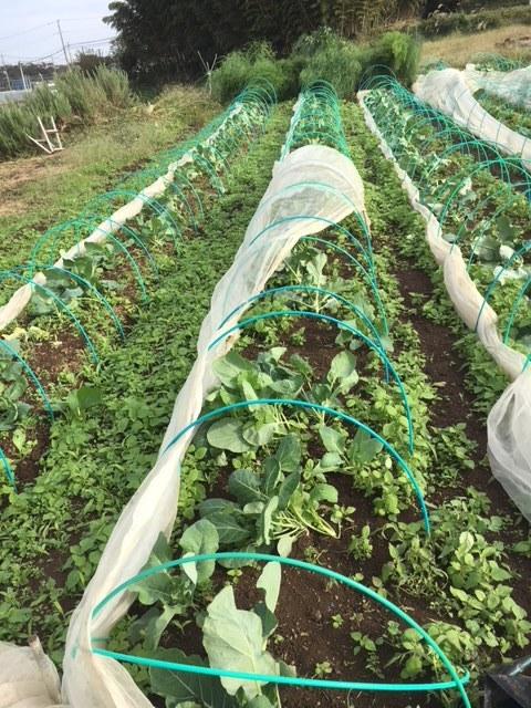 台風21号の爪痕です 予想通り茄子は全滅 背の低い野菜達はダメージは大きかったですが助かりました_c0222448_12033893.jpg