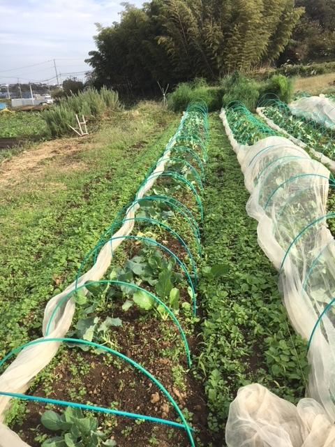 台風21号の爪痕です 予想通り茄子は全滅 背の低い野菜達はダメージは大きかったですが助かりました_c0222448_12035439.jpg