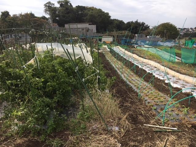 台風21号の爪痕です 予想通り茄子は全滅 背の低い野菜達はダメージは大きかったですが助かりました_c0222448_12040950.jpg