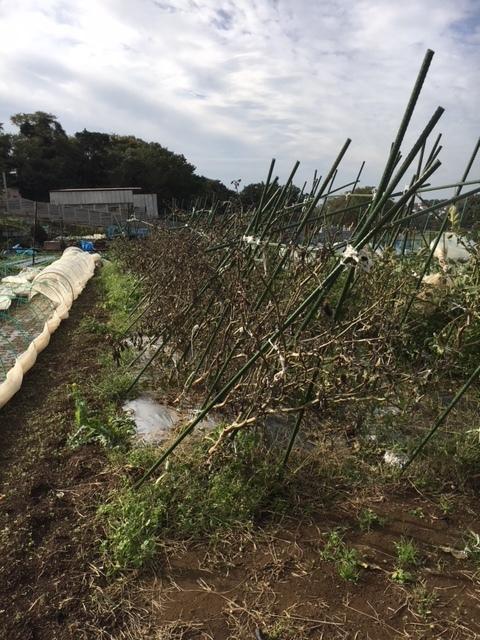 台風21号の爪痕です 予想通り茄子は全滅 背の低い野菜達はダメージは大きかったですが助かりました_c0222448_12043719.jpg