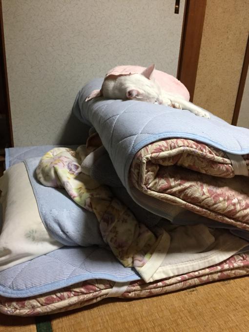 c0180209_02181280.jpg