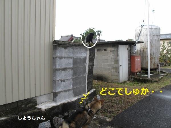 f0143123_20062222.jpg