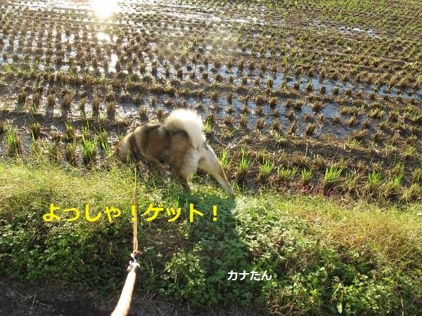 f0143123_20073407.jpg